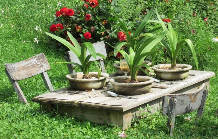 Pflanzen auf meinem Tisch